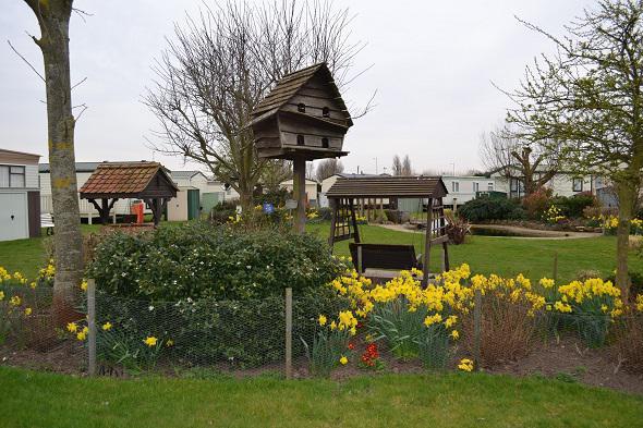 Barham Park Daffodils